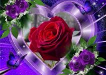Rose in the heart
